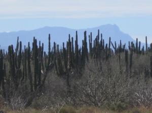 Sierra de Laguna
