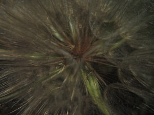 seedhead, Steamboat