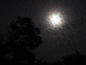 fish scale clouds and moon