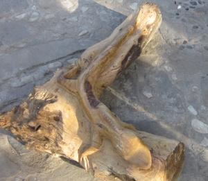 iguana copy